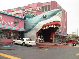 Shark Heads Before